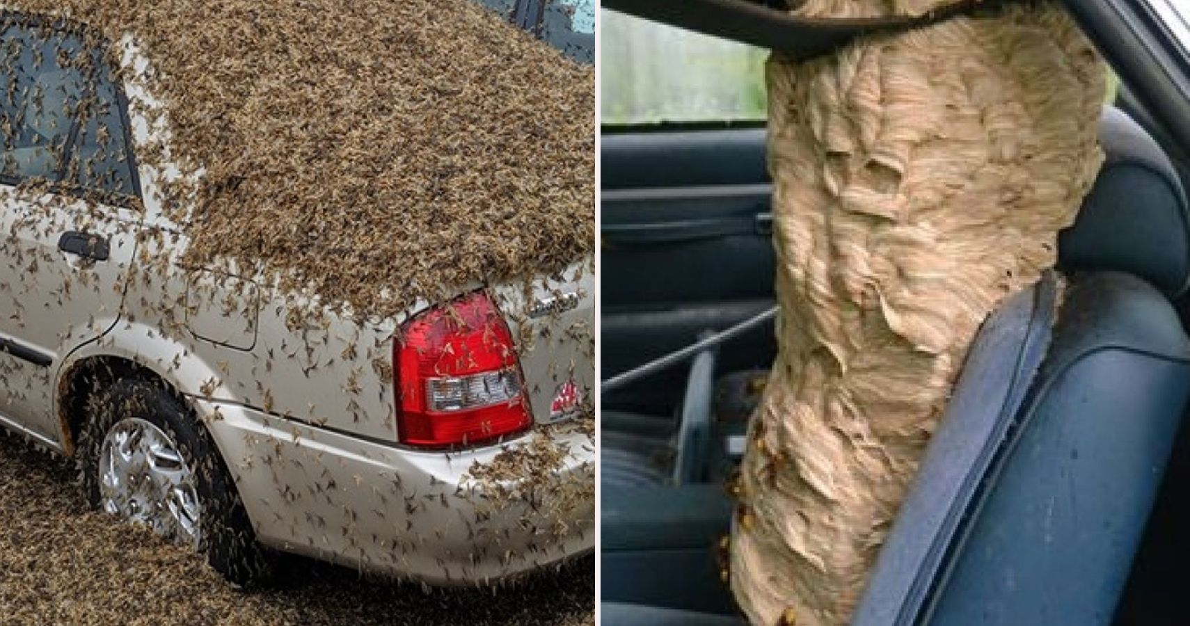 10 Unsettling Images Of Cars Covered In Disgusting Bugs