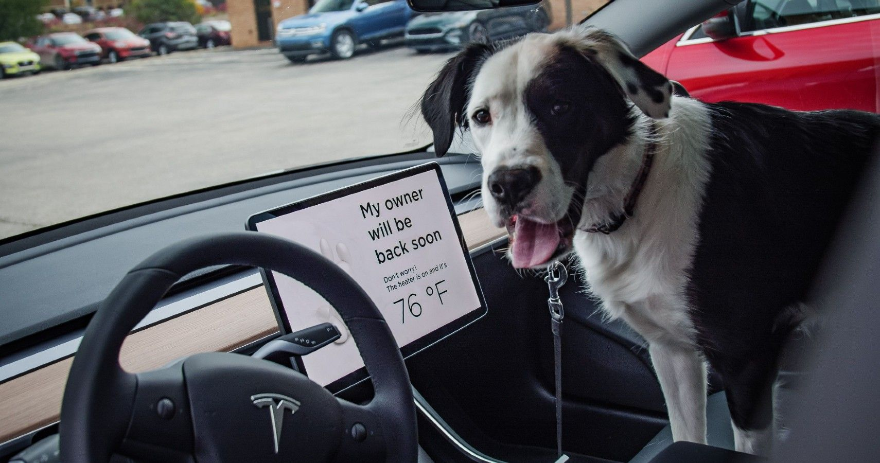 Here's How Reliable Tesla's Dog Mode Is   HotCars